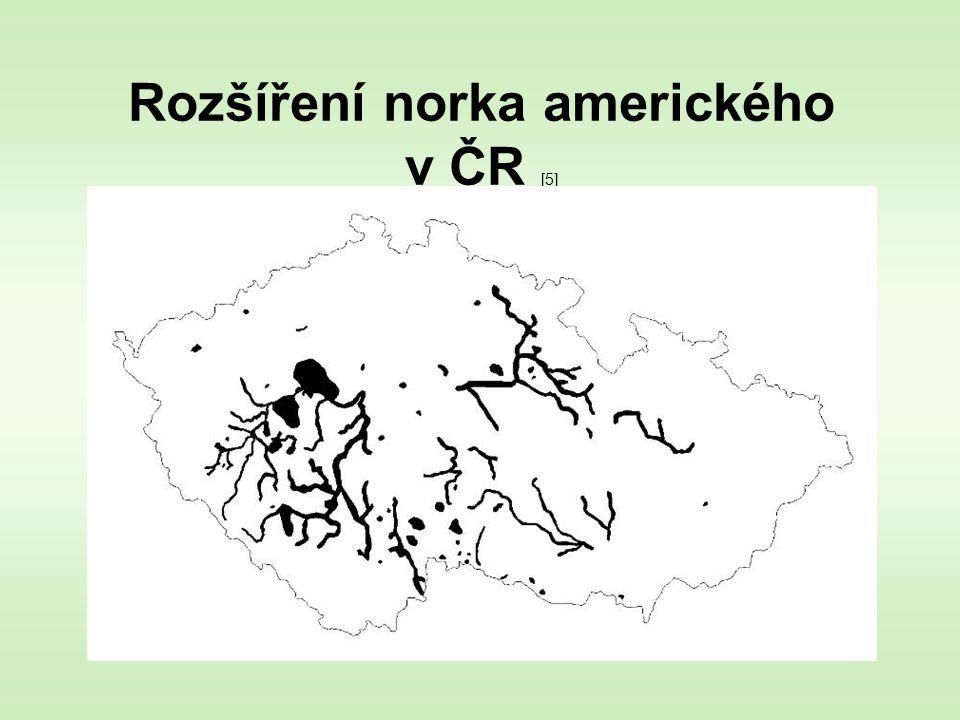 Rozšíření norka amerického v ČR [5]